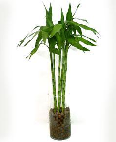 aulas-gratis-feng-shui-15-bambu