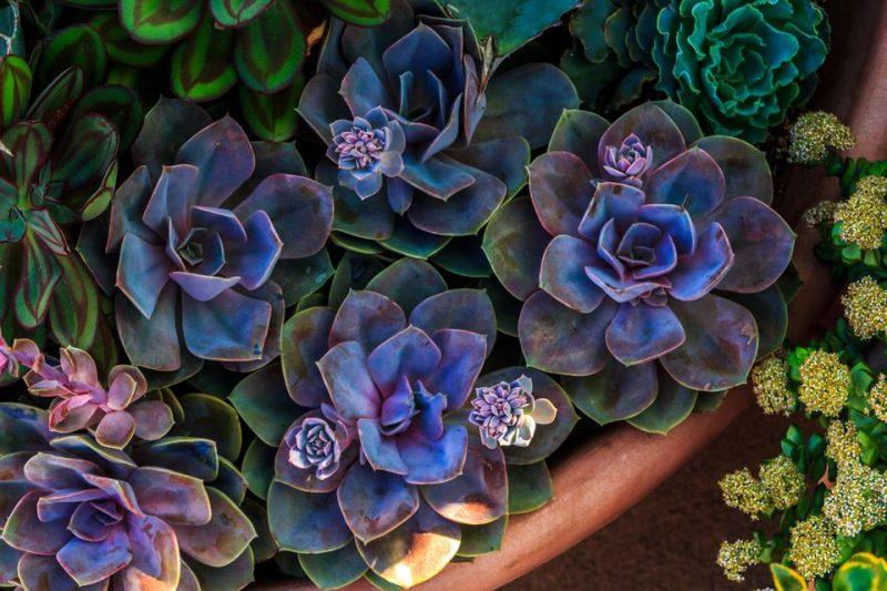 Flores e 5 Elementos Chineses - Água